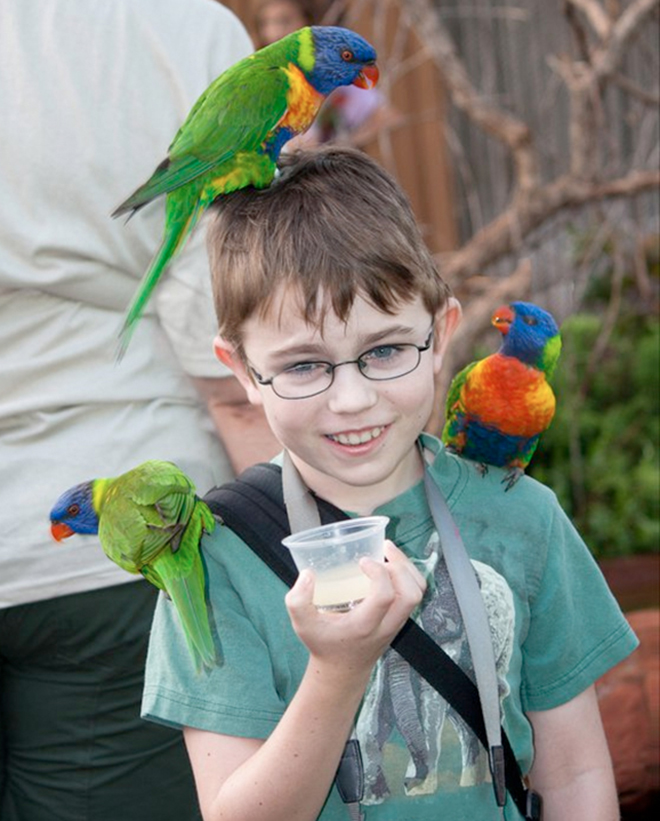 Feeding Lorikeets at the Zoo